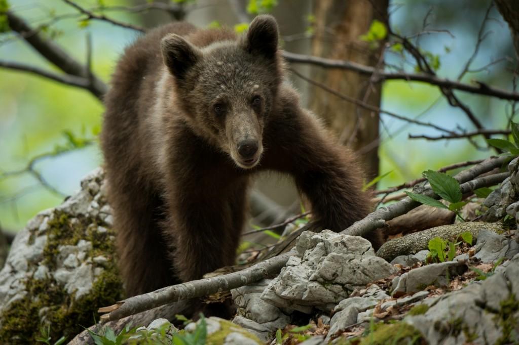 Eye to eye with a bear